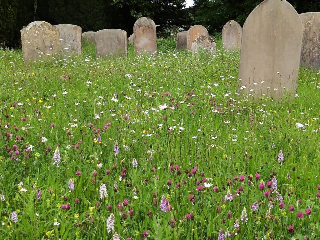 yellow daffodils green grass stone gravestones